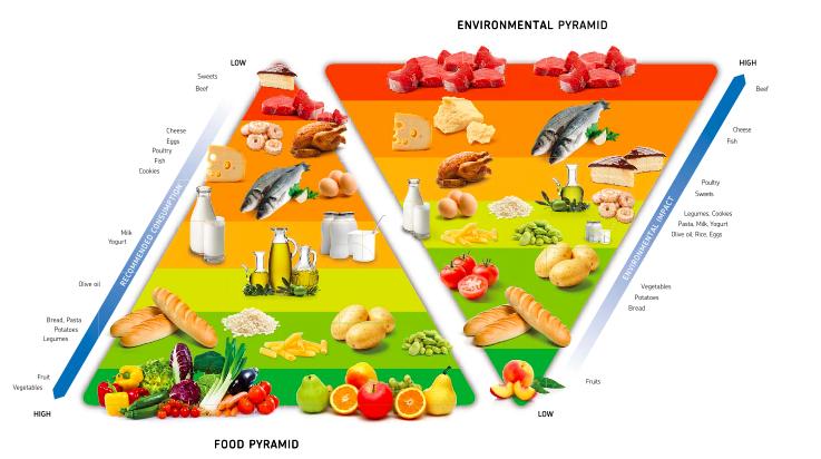 food environmental pyramid